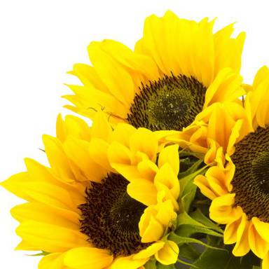 Sunflower cold pressed oil protects against harmful bacteria, soothes skin that is irritated, inflamed, calloused, and rough, and prevents acne breakouts