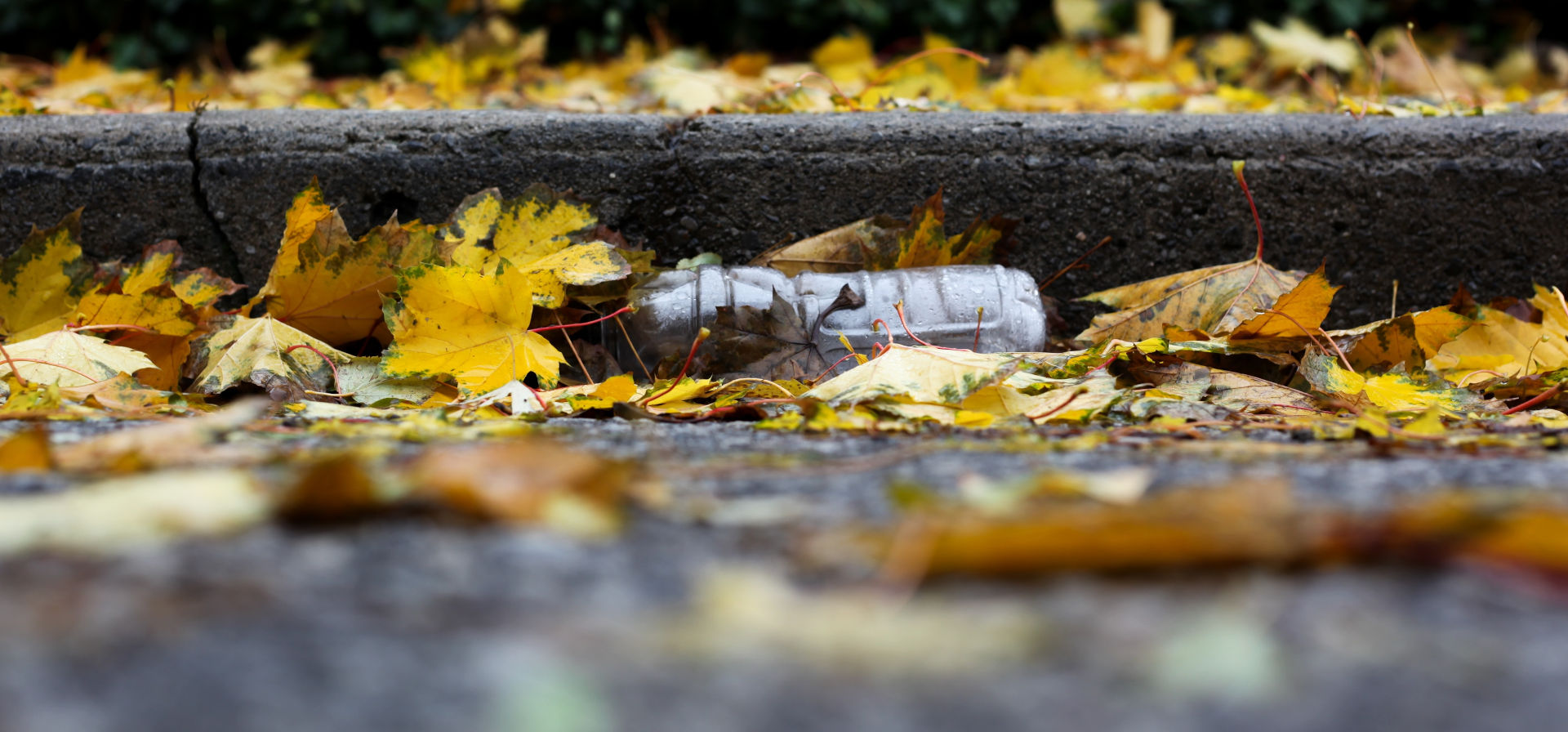 It is just an empty plastic bottle, alone and innocent and causing a nuisance for the next few hundred years