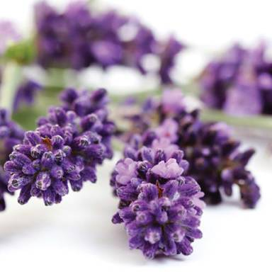 Lavender has many benefits, such as improving circulation and aiding skin renewal which improves tone, firms up skin