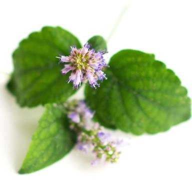 Patchouli essential oil is good at regenerating new skin cells, thus keeping the skin looking healthy, young, and vibrant